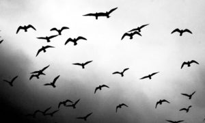 Birds in Flight Photo